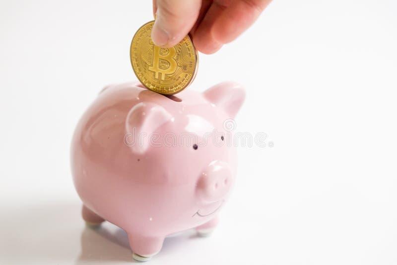 Une main met la pièce de monnaie de bitcoin d'or dedans dans la tirelire rose La tirelire, main tient l'argent virtuel de pi?ce d image stock