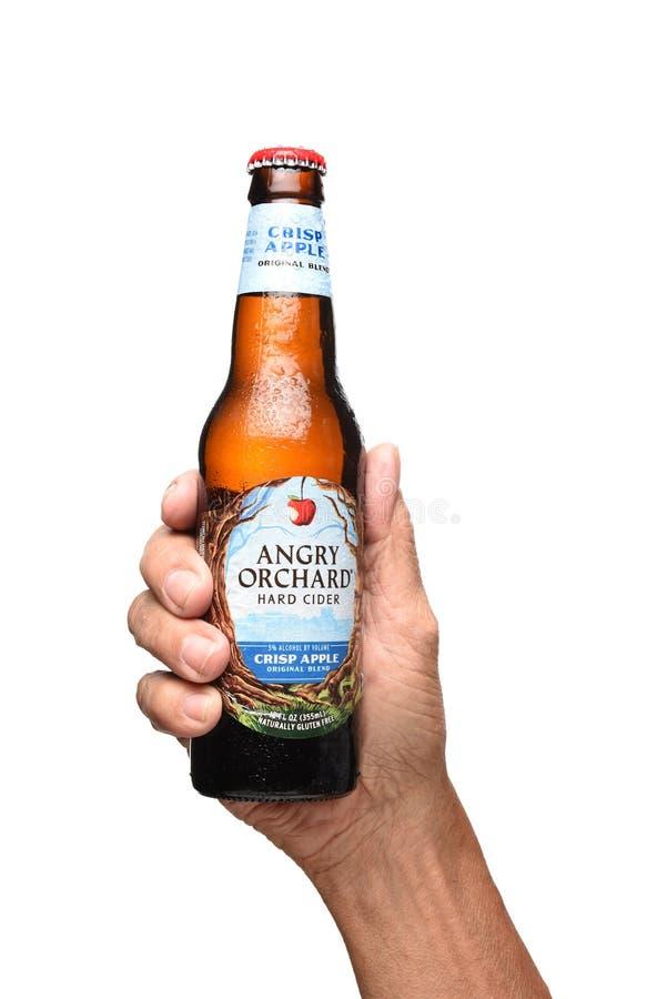 Une main tenant une bouteille de cidre dur croquant d'Apple de verger fâché au-dessus de blanc image stock