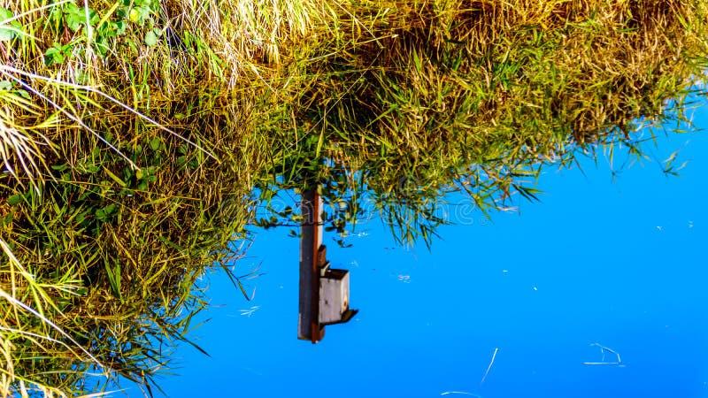 Une maison d'oiseau se reflétant dans l'eau calme des marécages de crique de Silverdale, d'un marais d'eau douce et du marais prè images stock