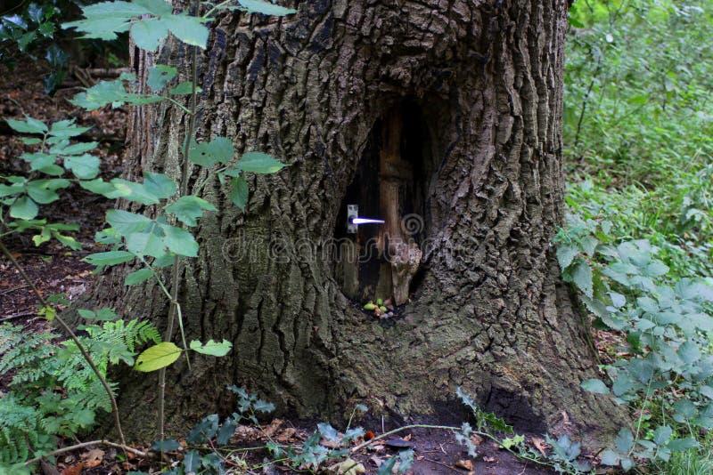 Une maison de gnome photographie stock libre de droits