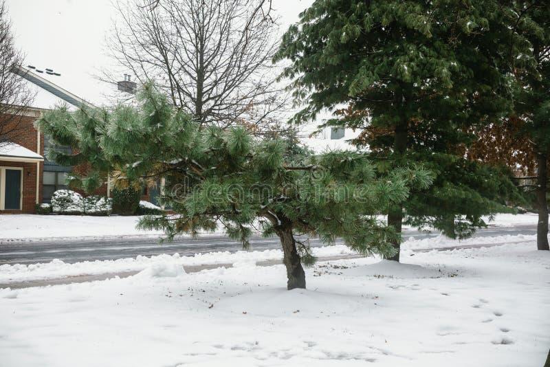 Une maison gentille après un arbre de neige d'hiver de tempête de neige photos libres de droits
