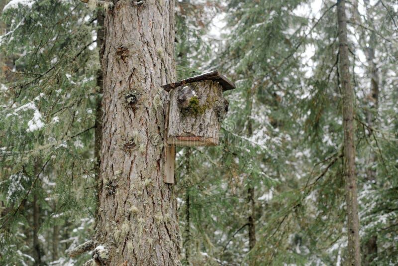 Une maison pour des oiseaux faits à partir de l'écorce d'arbre image libre de droits