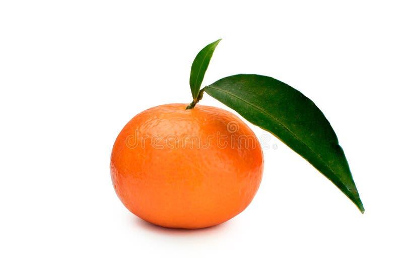 Une mandarine avec les feuilles vertes à un arrière-plan blanc mandarine image libre de droits