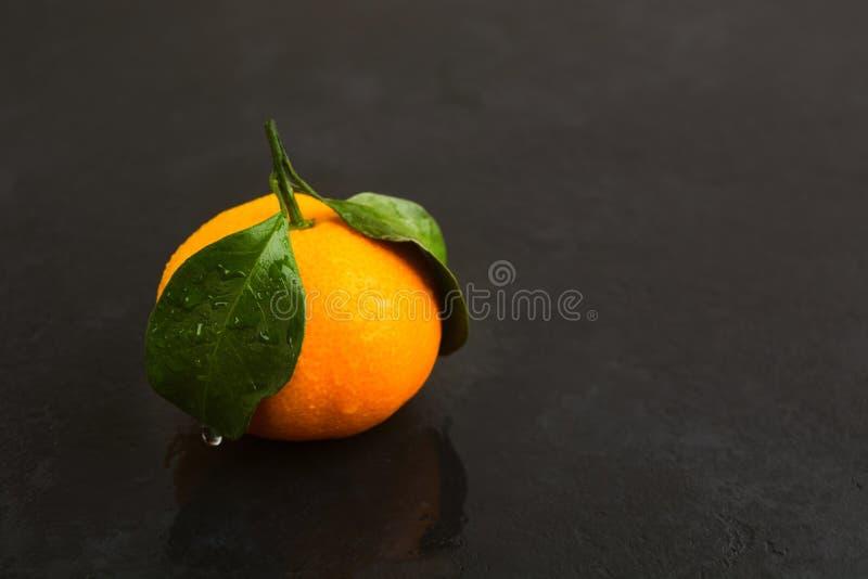 Une mandarine humide fraîche avec les feuilles vertes sur le fond noir photos libres de droits
