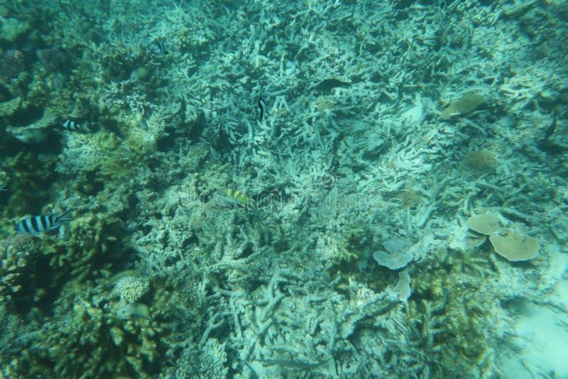 Une mer sous-marine bleue de beau jardin de corail image libre de droits