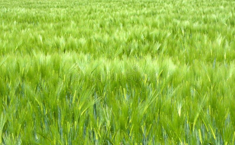 Une mer verte photos libres de droits