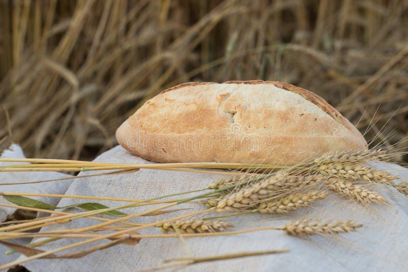 Une miche de pain est des oreilles d'un blé image stock