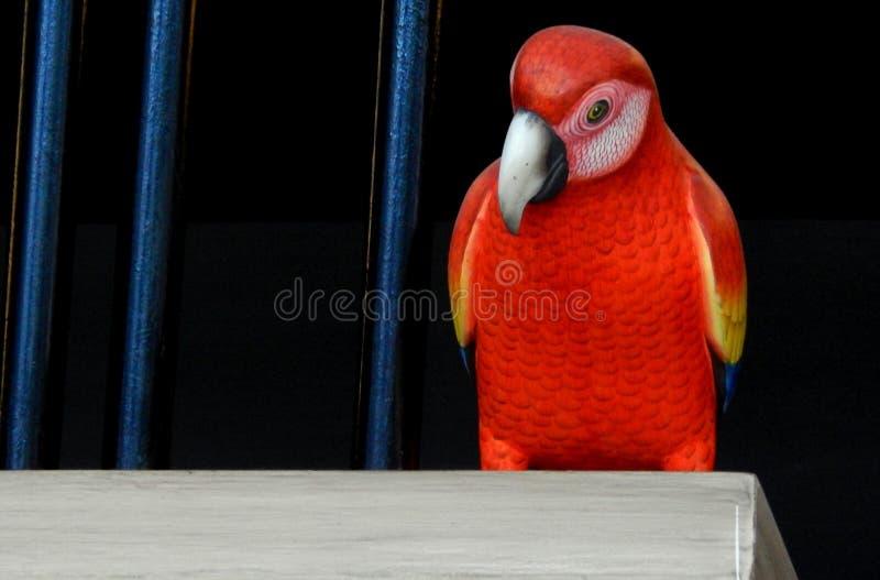 Une miniature de perroquet rouge photographie stock libre de droits