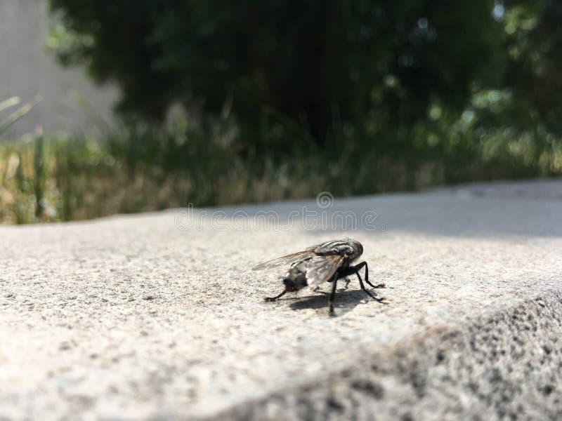 Une mouche se repose sur une tuile de granit image stock