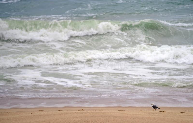 Une mouette à la plage images stock