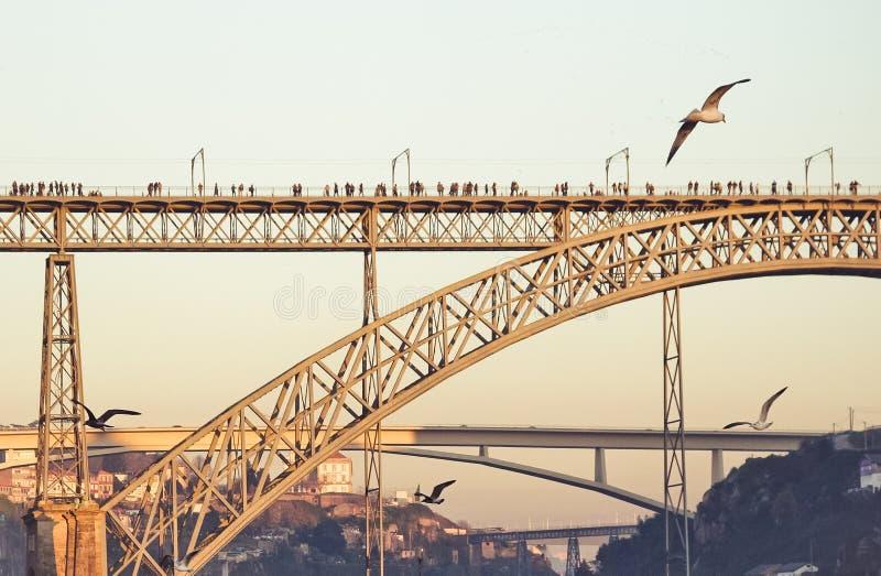 Une mouette de vol dans la ville photos libres de droits
