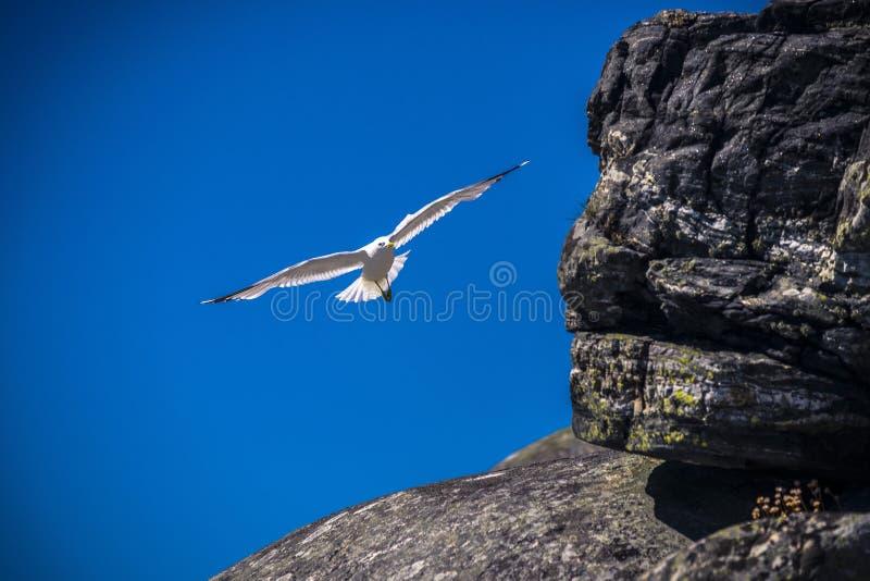 Une mouette volante contre un ciel bleu profond photographie stock libre de droits