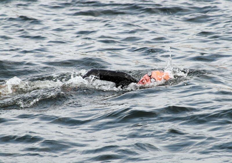 Une natation femelle de triathlete photos stock