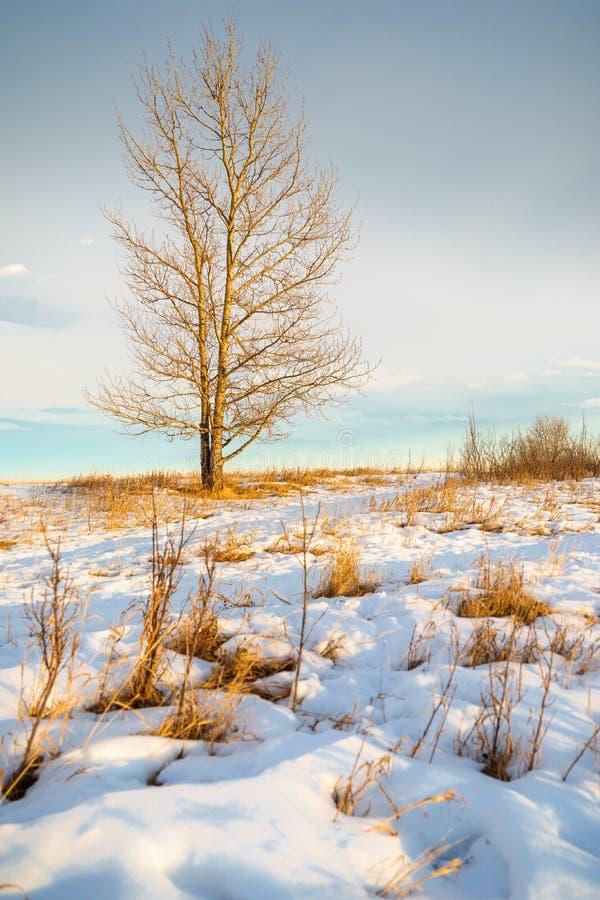 Une neige a couvert le chemin par l'arbre isolé image stock