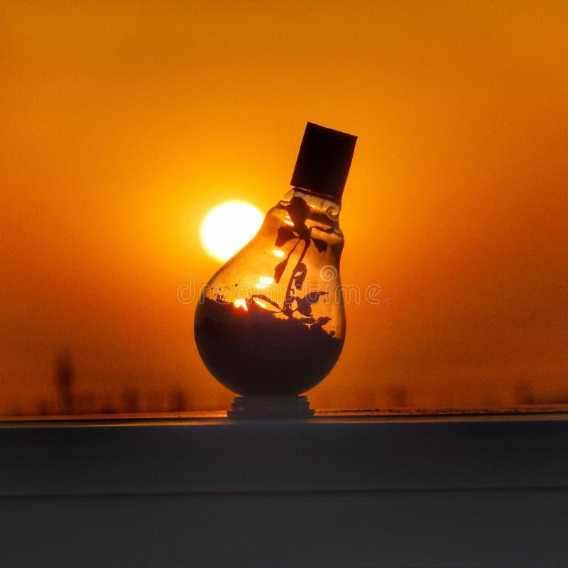 Une nouvelle vie à l'intérieur d'une ampoule appréciant le coucher du soleil photos stock