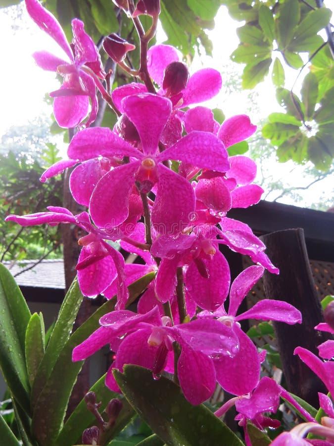 Une orchidée images libres de droits