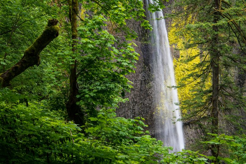 Une ouverture dans une for?t verte luxuriante accentue une vue d'une belle cascade coulant en bas d'une falaise moussue photographie stock