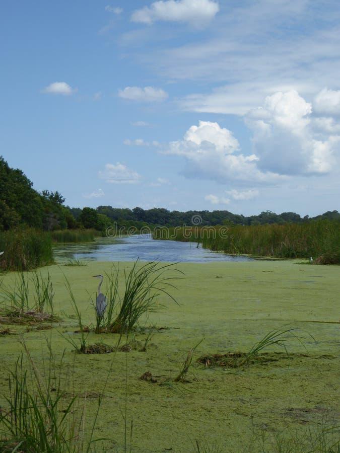 Une pêche de héron au milieu d'une rivière en Caroline du Sud image libre de droits