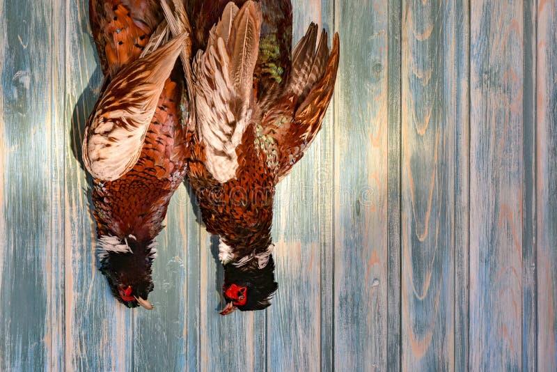 Une paire de faisans masculins sur un vieux fond en bois Saison de chasse Copiez la pâte images stock