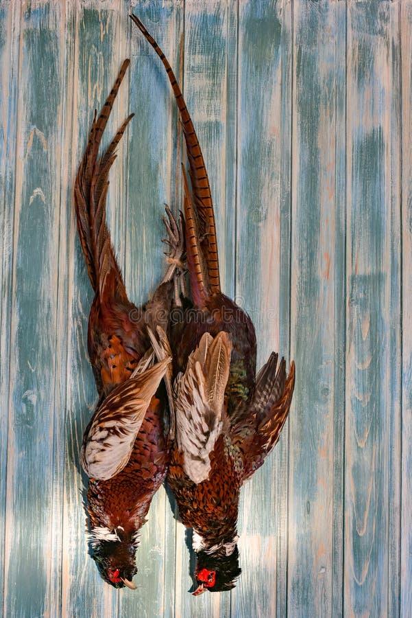 Une paire de faisans masculins sur un vieux fond en bois Saison de chasse Copiez la pâte Normal image stock