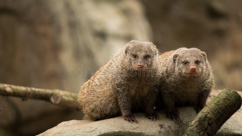Une paire de mammifères images libres de droits