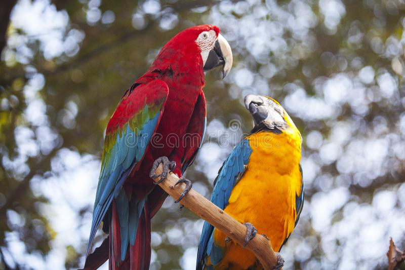 une paire de perroquet image stock