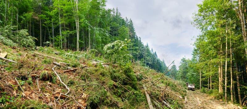 Une partie d'une pente de montagne pendant les arbres réduite images stock