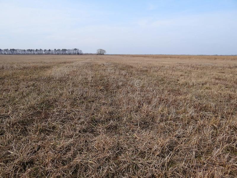 Une partie d'un champ brun avec l'herbe sèche et d'arbres sur l'horizon avec le ciel photos stock