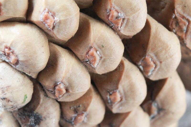 Une partie de cônes de pin photographie stock