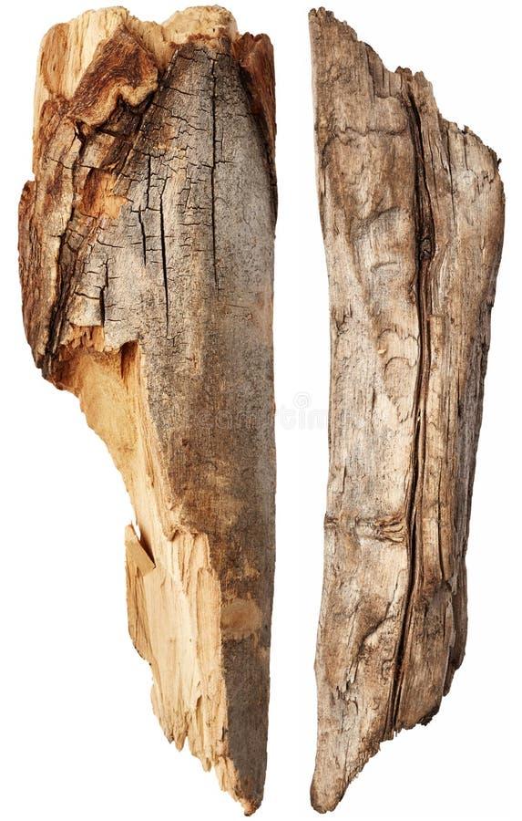 Une partie de tronc d'arbre photographie stock libre de droits