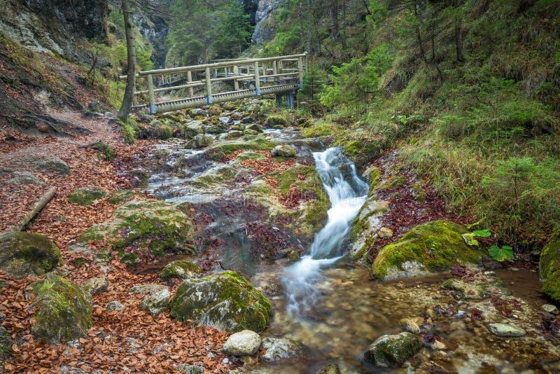 Une passerelle en bois au-dessus d'un courant dans une forêt image libre de droits