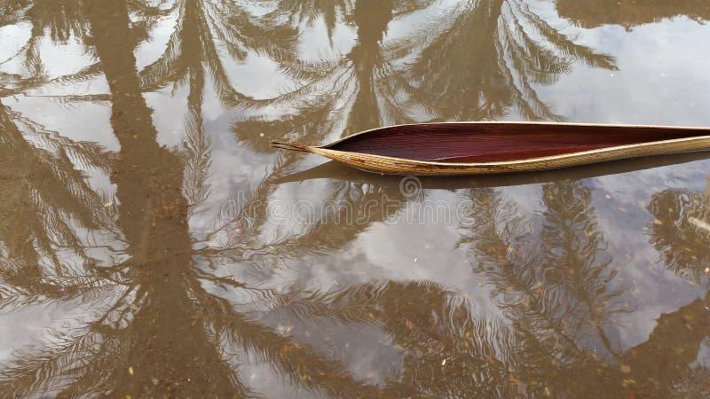 Une peau tordue de la branche qui ressemble à un canoë dans un magma un jour pluvieux, avec une réflexion de ciel et de palmiers, images libres de droits