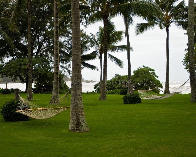 Une pelouse vide luxuriante avec des palmiers et des hamacs image stock