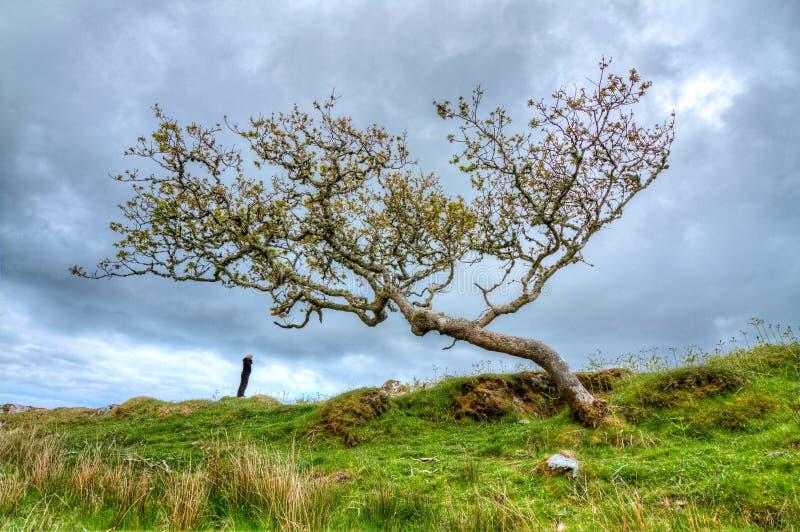 Une personne se tient sous un grand et tordu arbre photographie stock libre de droits