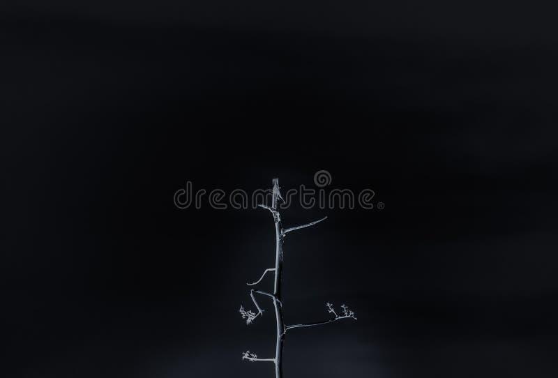 Une petite branche d'arbre cassée au-dessus d'un fond et d'un x28 noirs ; colours& inversé x29 ; minimaliste, l'espace de copie images stock