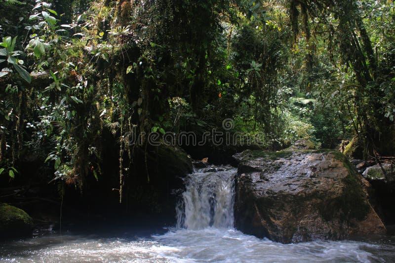 Une petite cascade avec beaucoup d'usines overhaning dans la forêt tropicale tropicale photos stock