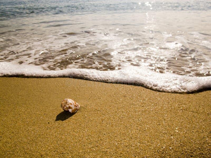 Une petite coquille d'océan image stock