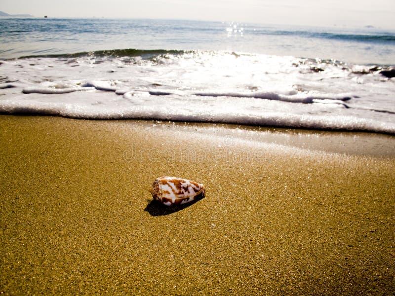 Une petite coquille d'océan photos libres de droits