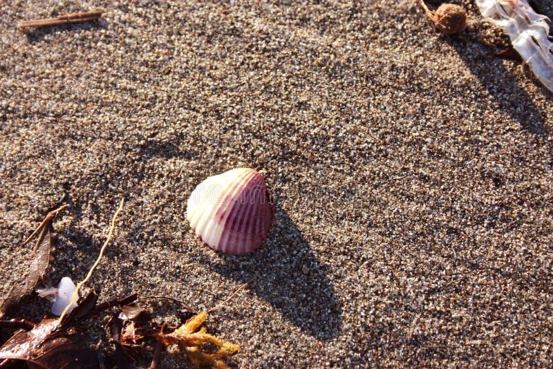 Une petite coquille simple a porté pour étayer par le courant de la mer images stock