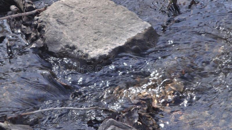 Une petite crique de montagne fonctionnant vers le bas dans l'étang de canard images libres de droits