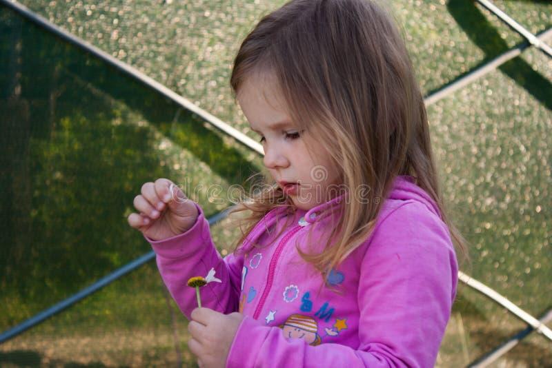 Une petite fille retire des pétales d'une marguerite images stock