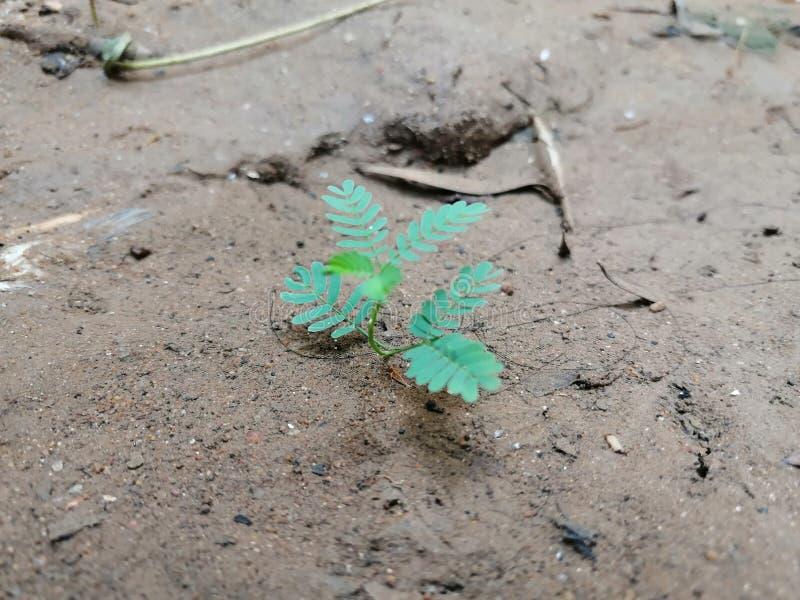 Une petite plante verte fraîche s'élevant sur le sol photos libres de droits