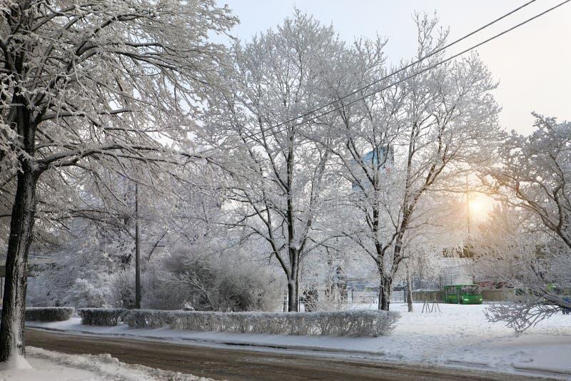 Une petite route de voiture dans une ville hivernale au milieu des arbres enneigés Saint-Pétersbourg, Russie photographie stock