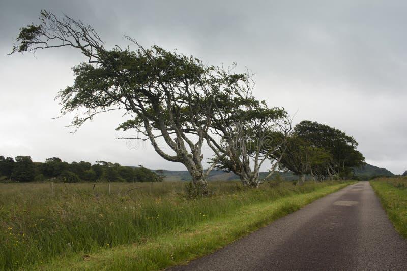 Une petite route par la campagne écossaise sauvage photos libres de droits