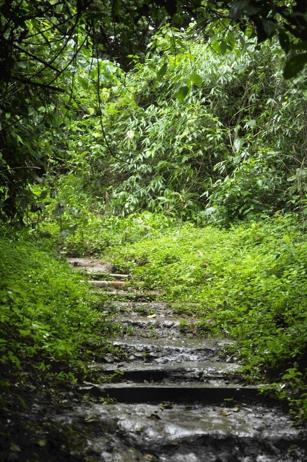 Une petite section du sentier de randonnée par le parc de visibilité directe Chorros en Costa Rica images stock