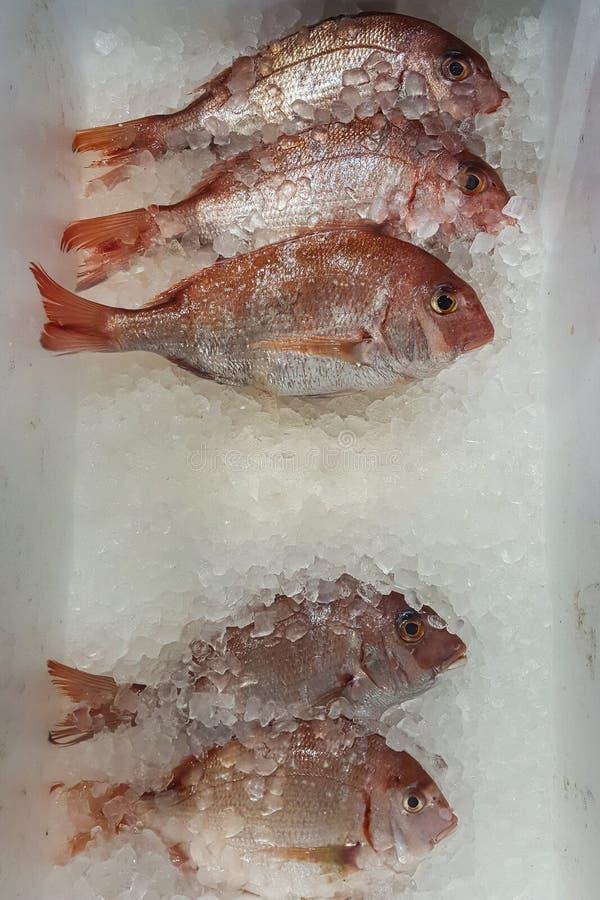 Une photo de brème ou de Madai de la Mer Rouge à la poissonnerie photo libre de droits