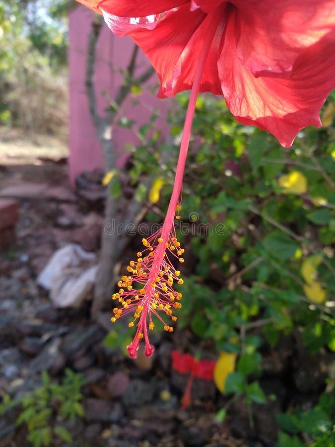 Une photographie rouge de fin de fleur images stock