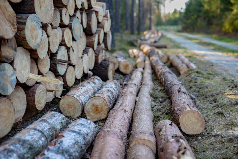 Une pile de bois par une route b?tonn?e dans un secteur bois? Travaux men?s ? bien en moissonnant le bois de construction image libre de droits