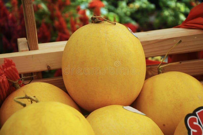 Une pile de fruit de cantaloup ou de melon de roche images libres de droits