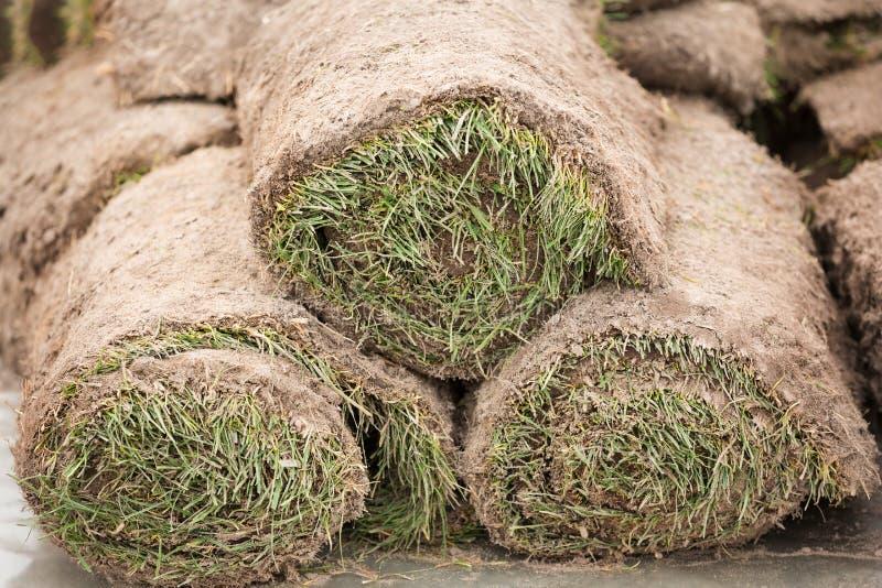 Une pile de gazon herbeux en petits pains, petit pain d'herbe, de manière opérationnelle dans l'horticulture ou l'aménagement images stock